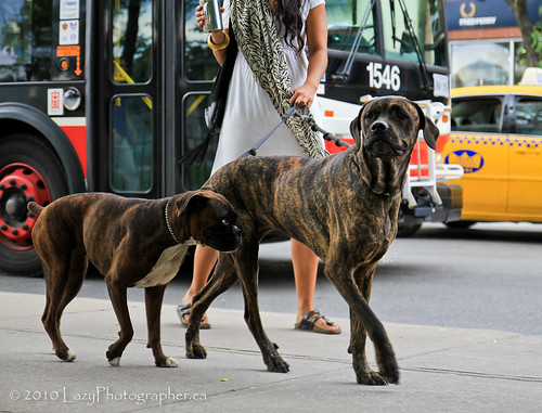 Two Big Ol' Dogs A-Walkin' | by The Lazy Photographr