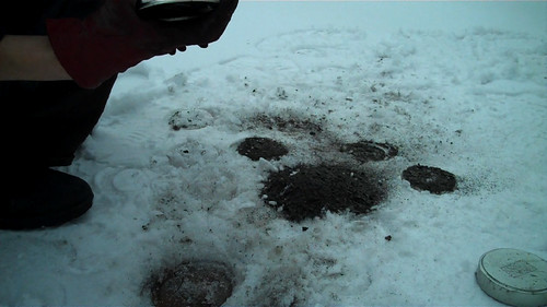 pawprint | by mobius.org