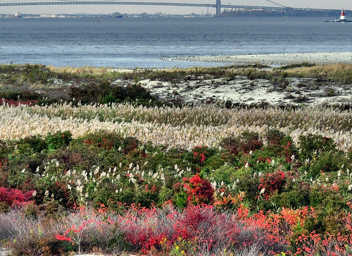 Natural garden at the foot of New York Harbor | by joiseyshowaa