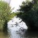 Canals a prop de la Bassa de les Olles