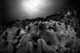 The Absent Spectrum - Vatu-i-Ra Channel, Fiji | by Jim Patterson Photography