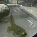 Frog Metamorph