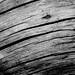 new drift  wood