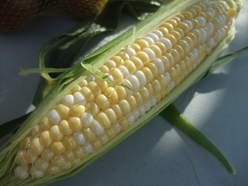 Sweet Corn | by swampkitty