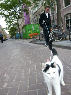 cat on lead | by amsterol
