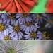 Close-up +4 filter