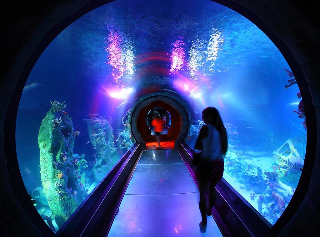 ... SEA LIFE Ocean Tunnel | By Gbrummett