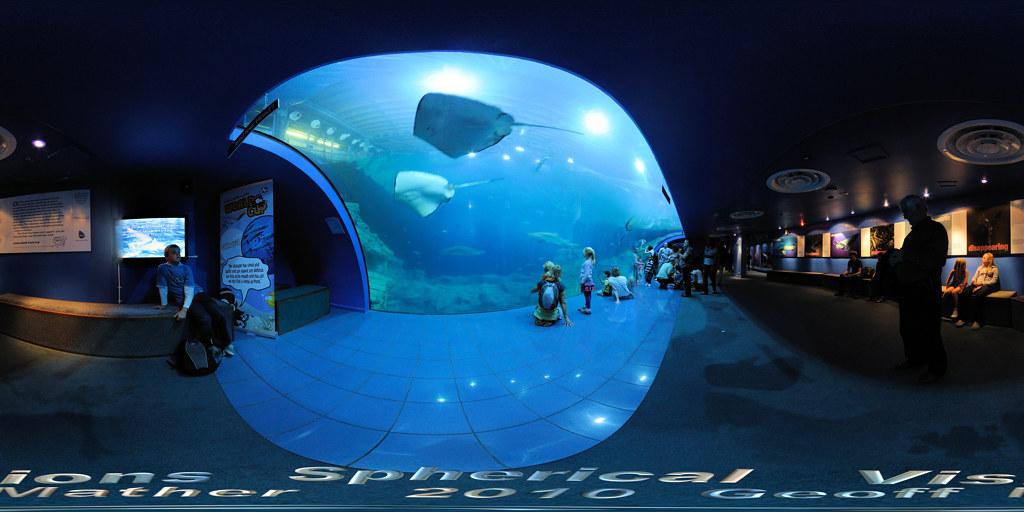 the new marine aquarium pdf