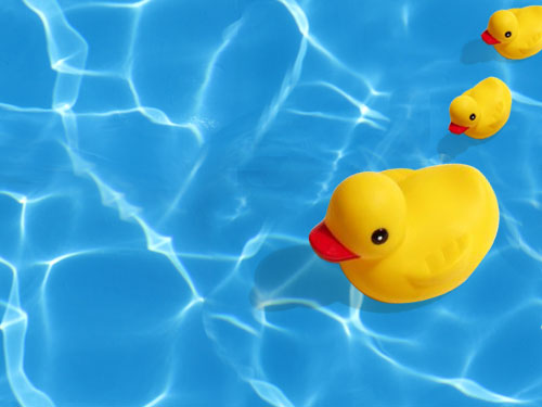 Rubber Duck Background Image Rubber Duck Background