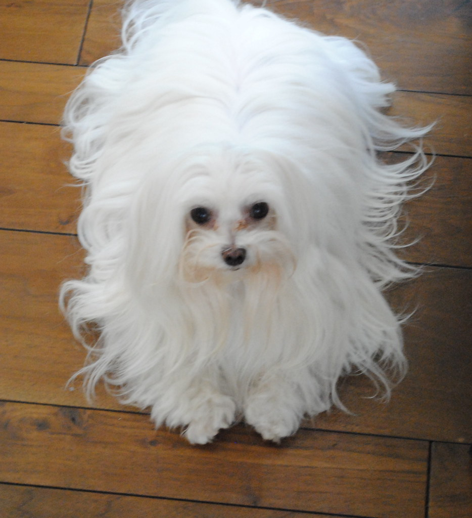 Dog Grooming Best Courses Near Me