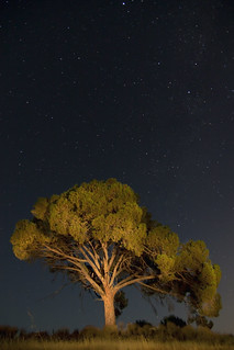 Lonely tree       [Explore #11] | by Antonio Carrillo (Ancalop)