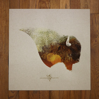 American Bison Print | by Mark.Weaver