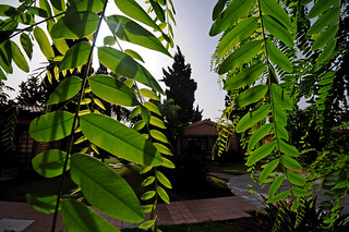 Morning light in the garden of our Bungalows Dunas Maspalomas on Gran Canaria | by Dunas Hotels & Resorts