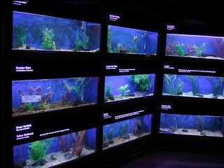 "Aquarium with separate tanks for different ""content"" 
