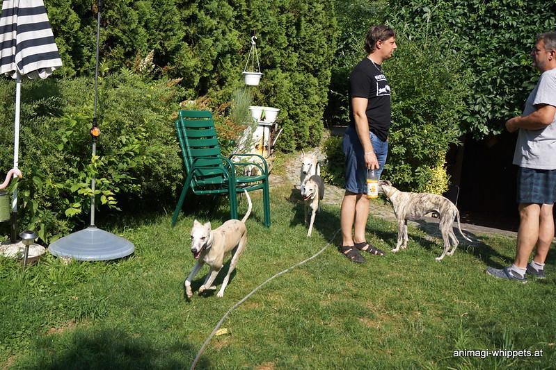 Hunde glücklich im Garten!