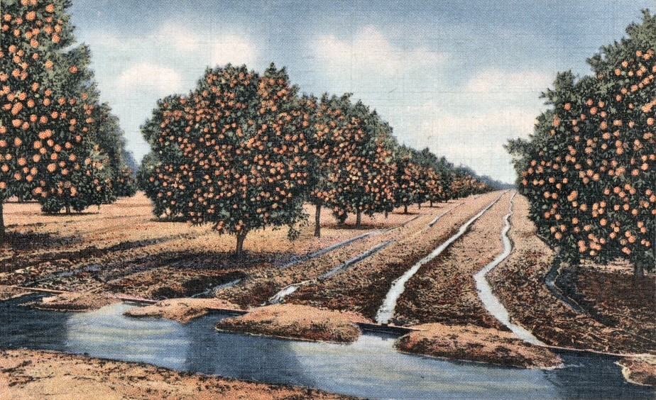 Irrigated Orange Groves Southern California There Are