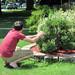 Jon quickly picks piece of shrub for id purposes
