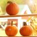 Pumpkins Textured