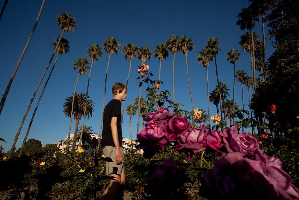 ... ROSE GARDEN 29, Pacific Palisades Park Santa Monica, California | By  Lkurnarsky