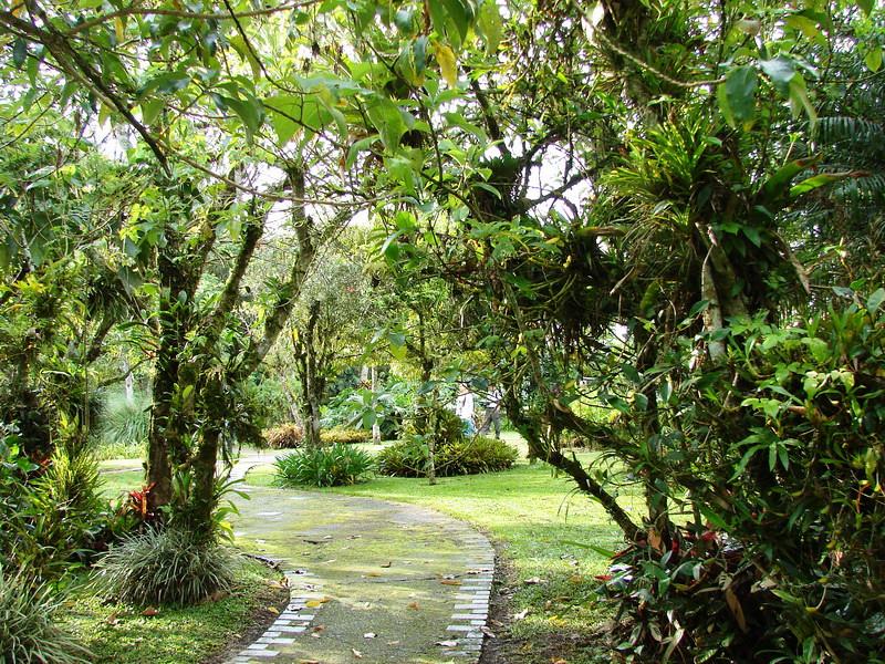 Jardin bot nico lankester costa rica jard n bot nico for Jardin botanico vina