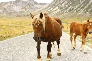 campo imperatore - wild horses | by peet-astn