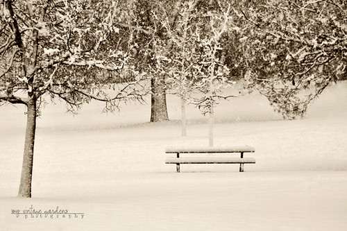 ~first snow ~ | by denisemasygaphotography