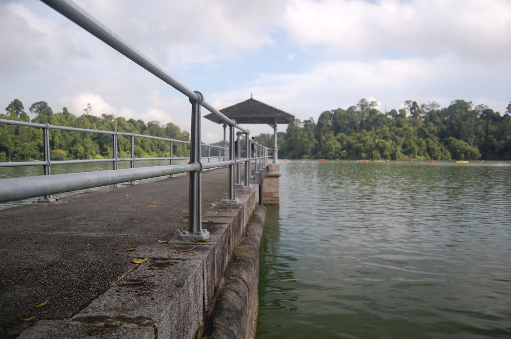 Macritchie Reservoir Park And Macritchie Nature Trail