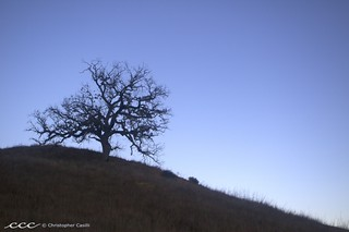 USA-California / Oak Tree Silhouette | by Les Yeux Heureux