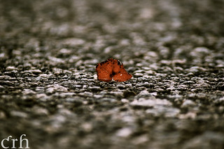 Small Leaf, Big World | by catherine_rene (I've been locked out of my account