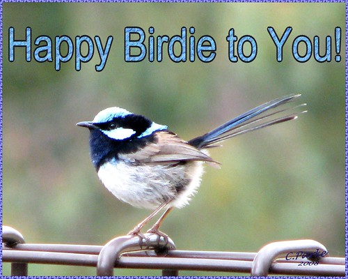 eCard: Birthday: Happy Birdie | by you get the picture