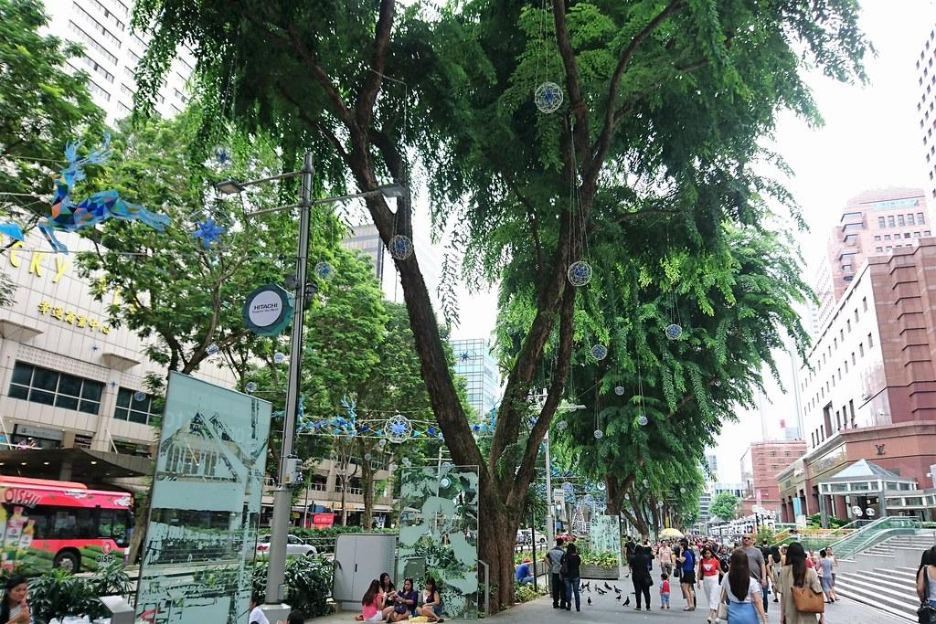 新加坡烏節路上的雨豆樹,寬大的樹冠為道路上車輛行人遮蔭擋雨。攝影:李育琴。