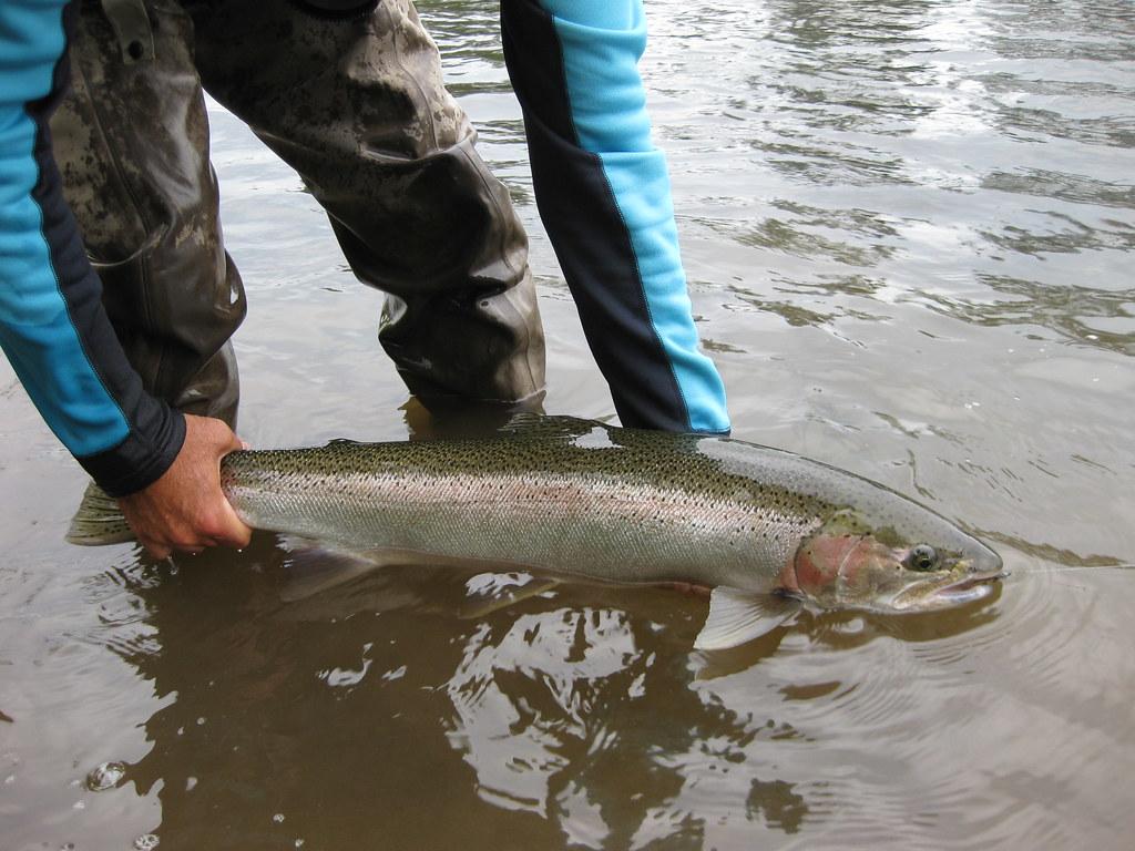 Willamette river steelhead chris daughters flickr for Willamette river fishing report