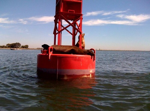 sea lions | by Contra Costa Times