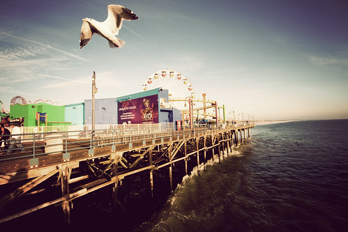 Los Angeles - The bird and the pier | by manlio_k