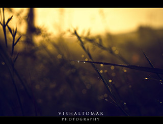 Morning dew. (Explored) | by VISHAL TOMAR