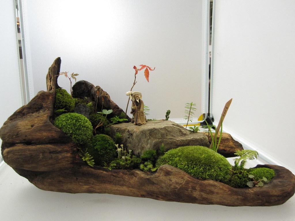Mini Bonsai Garden Minnie Flickr