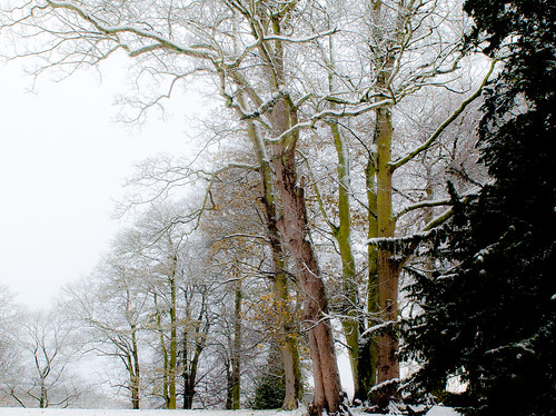 Winter at Woodleigh 3. By Thomas Tolkien | by Thomas Tolkien