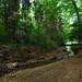 Erdei patak - Forest stream