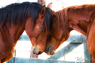 Love... | by Raphael Macek - Horse Photography