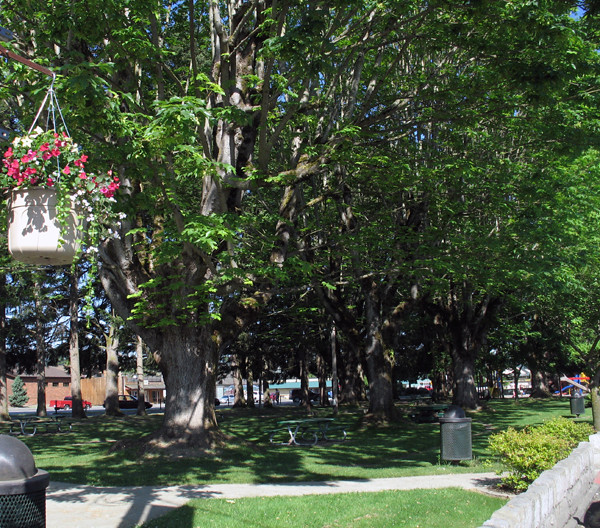 Orting City Park Wild Rose Quilt Shop Flickr