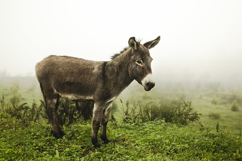The Donkey | by Jeremy Snell