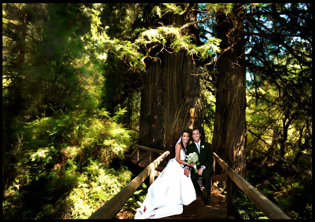 wedding ideas for august wedding in california redwoods s kamera flickr 27864