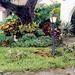 Sarasota - Debris from Tropical Storm Frances (2004)