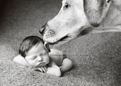 how to get dog ready for new baby