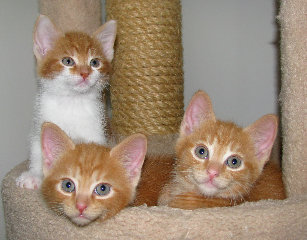 Image Result For Three Little Kittens