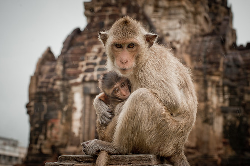 Monkey Family | by goingslowly