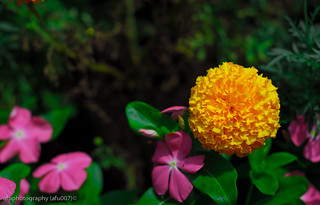Yellow | by afu007