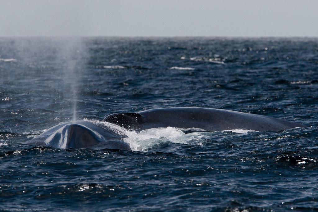 захотели кит пускающий фонтаны картинка уже говорила