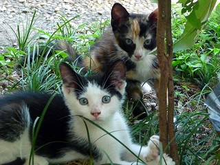 Two Kittens | by Philosopher Queen