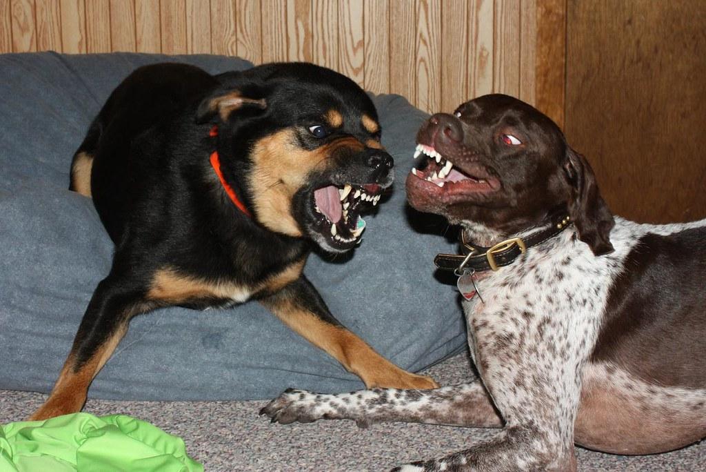 I Eat You | brooke bohling | Flickr
